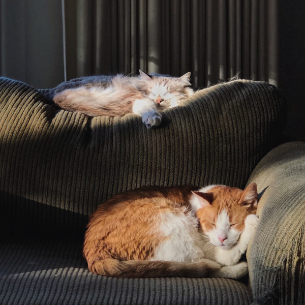two cats sleeping in sun puddles on a couch