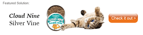 cat laying on its back next to an open tin of silvervine
