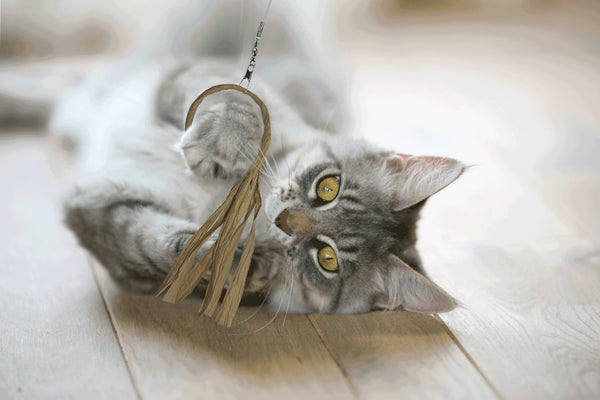 cat lying on back playing with a flutter-ring cat toy
