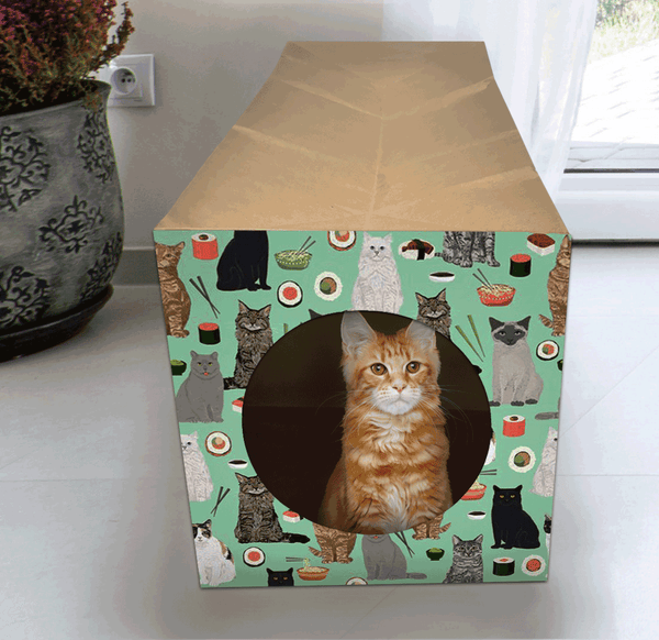 orange and white tabby kitten sitting inside the decorated Hide and Sneak accordion folded cat toy tunnel