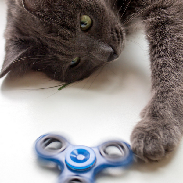 a gray cat lying on its side with front paw extended touching a spinner toy