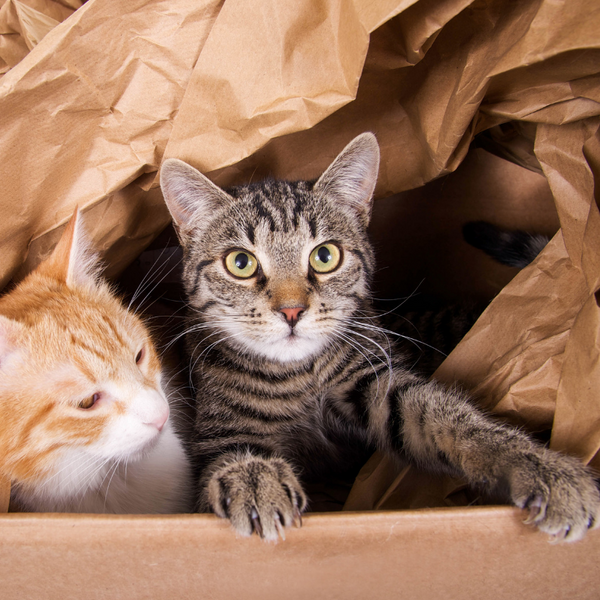 tabby kitten and orange kitten peering out of a box filled with brown paper