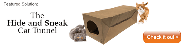 two cats playing with the Hide and Sneak cat tunnel