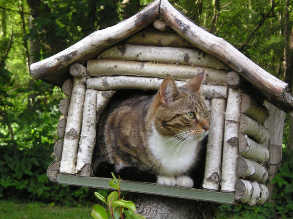 cat looking out of his log cabin cat house