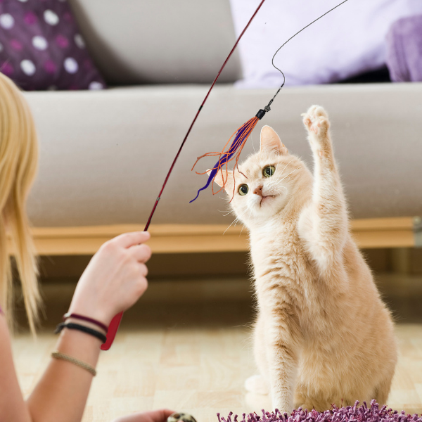 light orange tabby cat swatting at a wand toy
