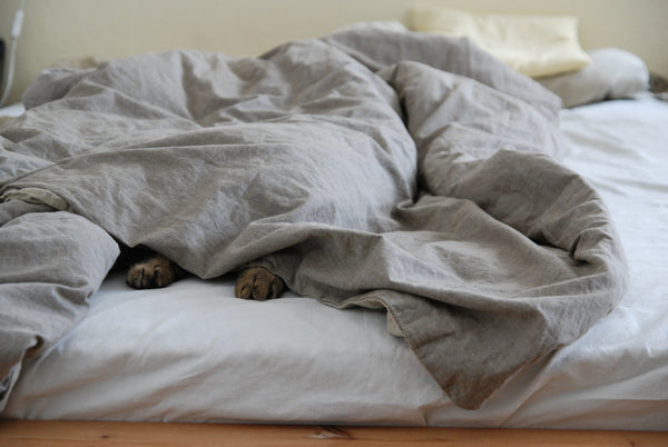 cat hiding under blanket with only the two front feet sticking out and showing