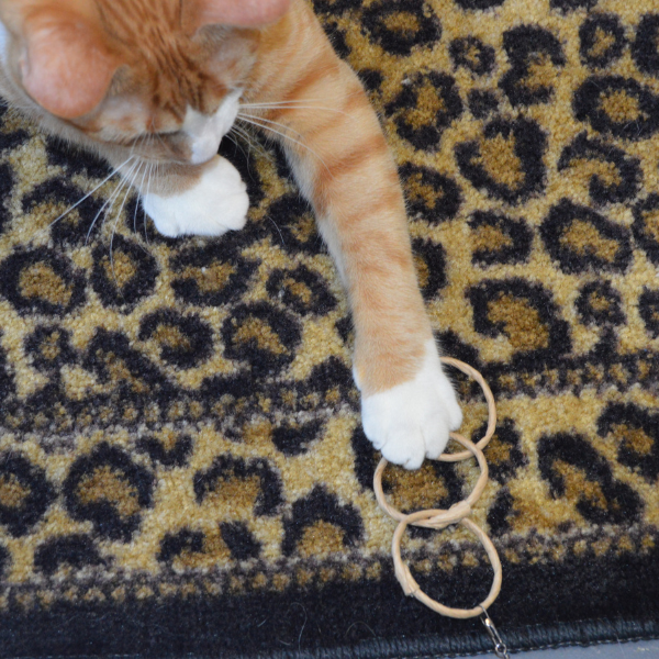 orange tabby cat on a couch with front paw extended as it holds onto an oh-ring wand toy attachment