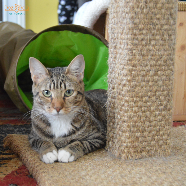 tabby cat sitting at the base of a scratching post looking at the camera