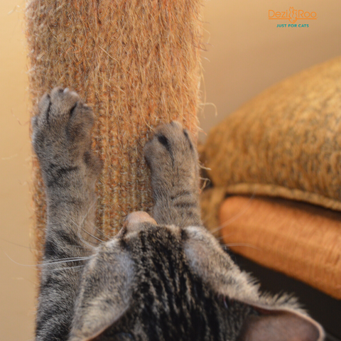Tabby cat reaching up a scratch post with claws in the sisal