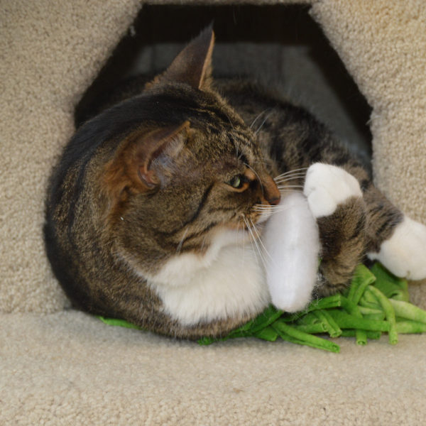 tabby cat inside a cat tree hidey hole playing with a cloud toy