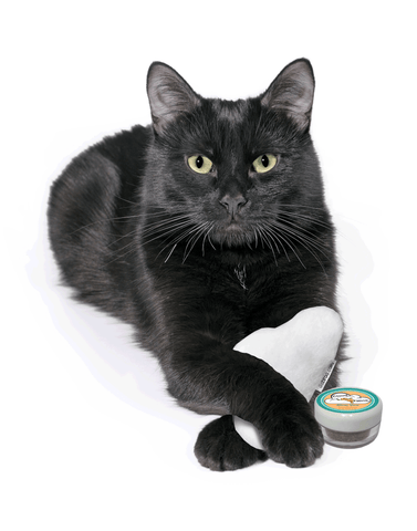 black cat holding plush cloud toy and silver vine pot