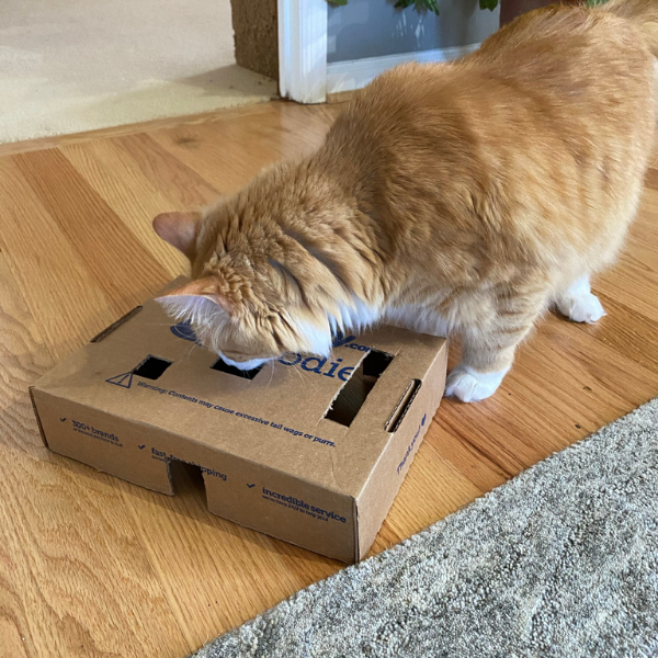 orange tabby cat looking inside a box that has been modified as a food puzzle
