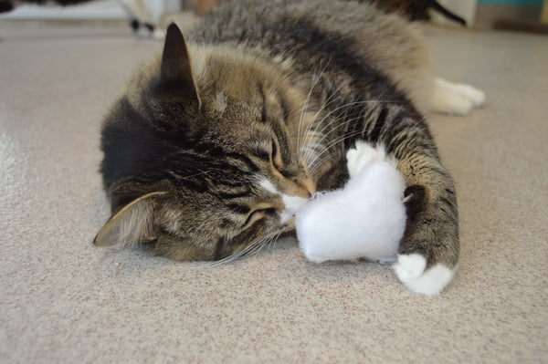 tabby cat lying on its side hugging a plush cloud toy