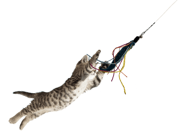 tabby cat jumping in air catching a Wiggly Squid toy