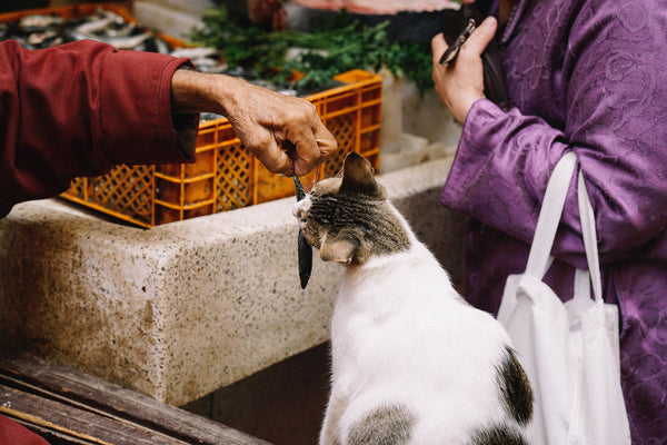 a woman's hand holding a fish in front of a cat offering it up for food