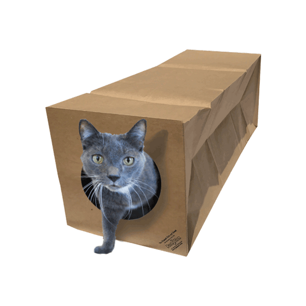 grey cat stepping out of Hide and Sneak cat toy tunnel
