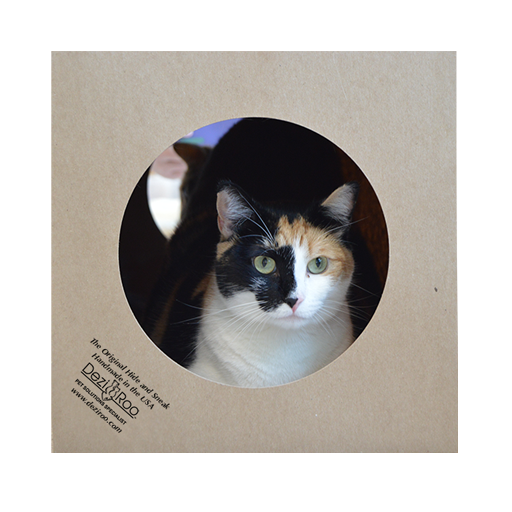 calico cat looking out of the paper cat toy tunnel Hide and Sneak