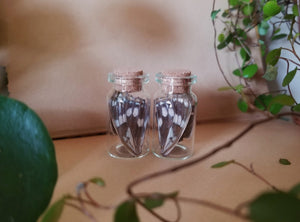 Matching Butterfly Jar Set
