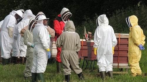 Beekeepers Mentoring Program - Full mentorship!