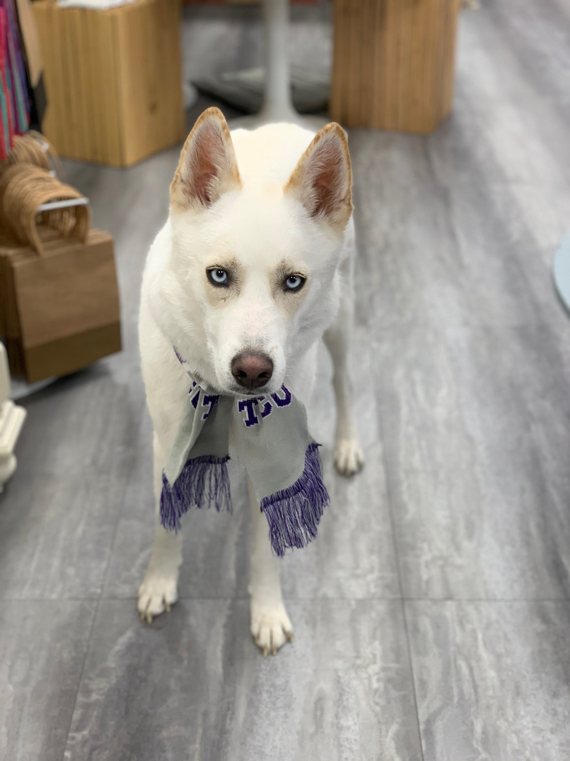 TCU Horned Frog Dog Scarf