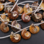 "Drilled Natural Baby Ammonite Fossil Beads 22mm Top Side Drilled Focal Bead Matched Pair Good for Earrings 16"" Strand"