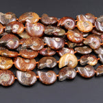 "Drilled Natural Baby Ammonite Fossil Beads Vertically Drilled Small Whole Ammonite Fossil Pendant Focal Bead 16"" Strand"