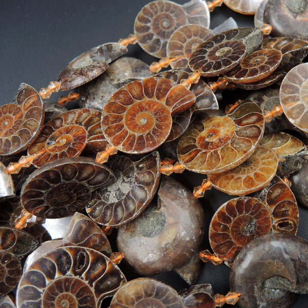 "Drilled Half Ammonite Fossil Slice Beads 30mm 35mm 40mm Vertically Drilled Real Genuine Ancient Natural Fossil Pendant Focal Bead 16"" Strand"