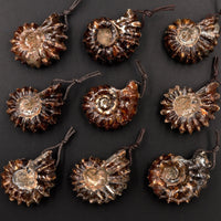 Natural Goat Horn Ammonite Pendants Top Side Drilled Ancient Fossil Focal Beads