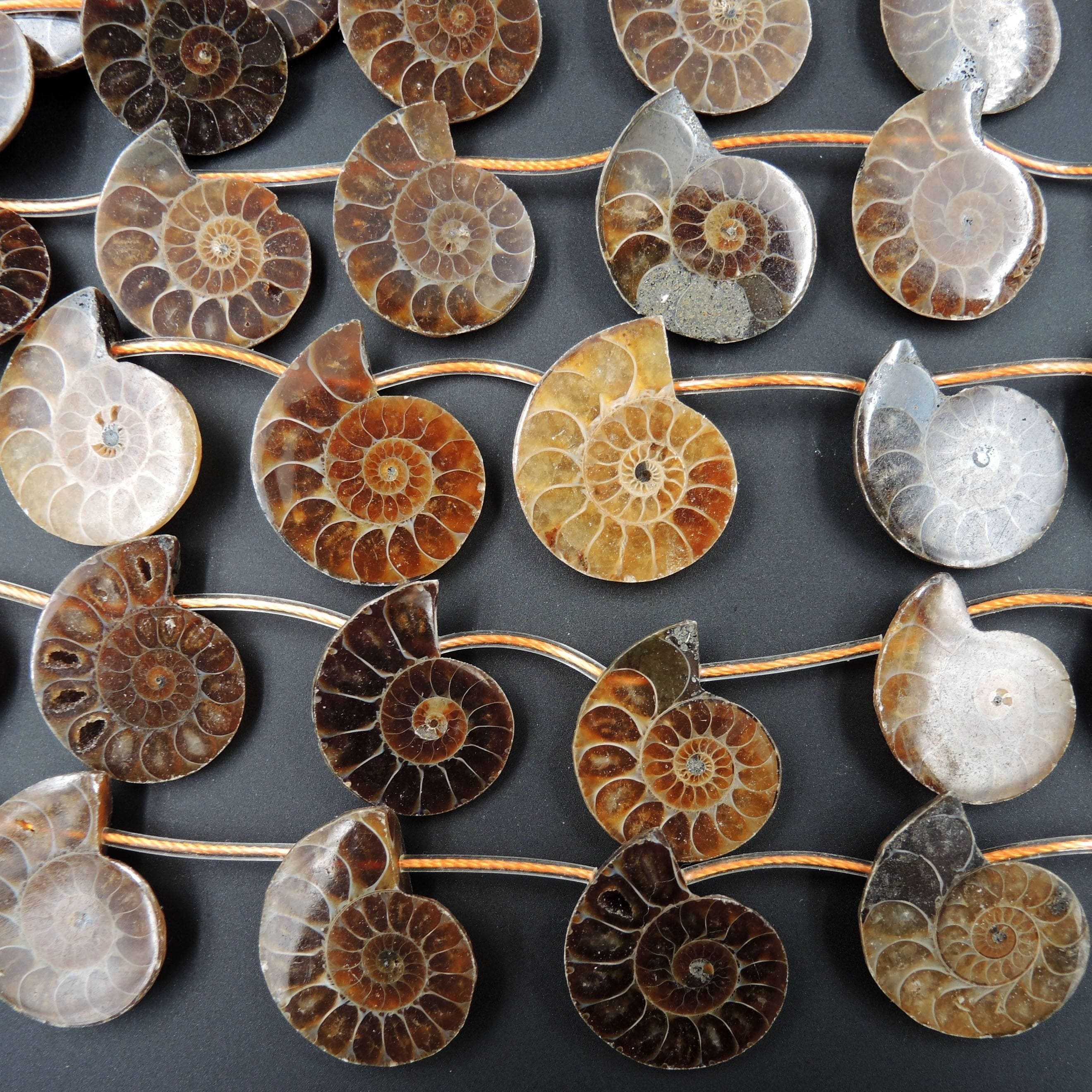"Natural Ammonite Fossil Beads Half Ammonite Slice Ammonite Top Side Drilled Focal Bead Pendant Matched Pair Good For Earrings 16"" Strand"