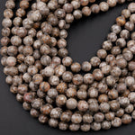 "Natural Fossil Crinoid Round Beads 4mm 6mm 8mm 10mm Earthy Gray Beige Tan Gemstone 15.5"" Strand"