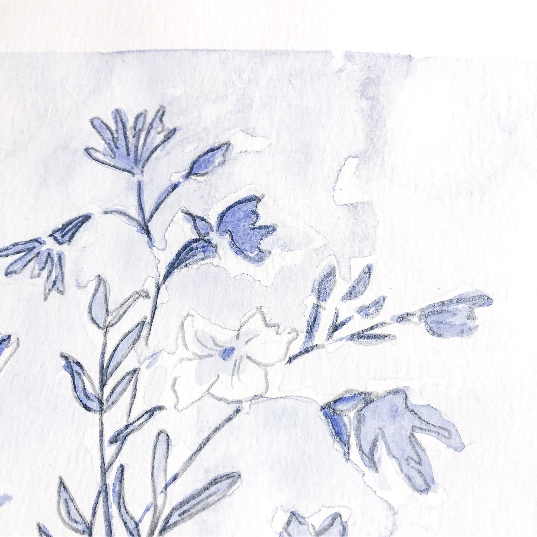 Botanical Studies No. 16