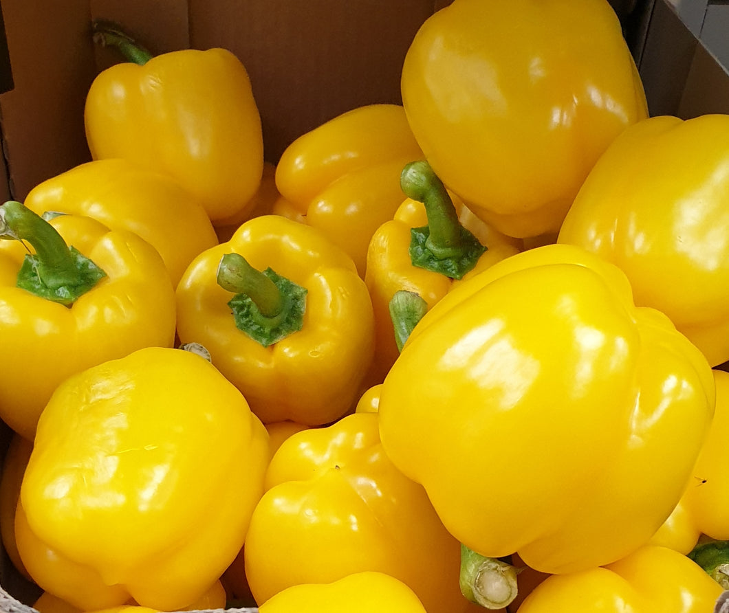 Yellow Peppers / capsicum