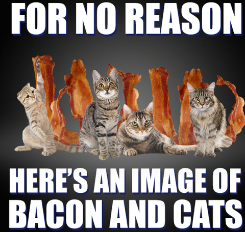 bacon space cats for no reason at all