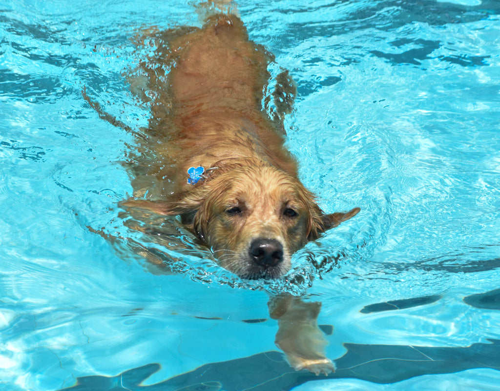 Five Fun Summer Activities for You and Your Best Canine Friend