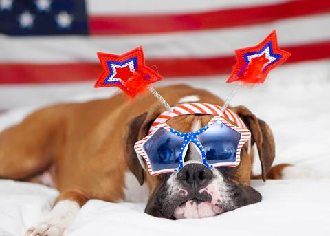 10 Must-Dos to Keep Your Pet Safe and Relaxed On July 4th