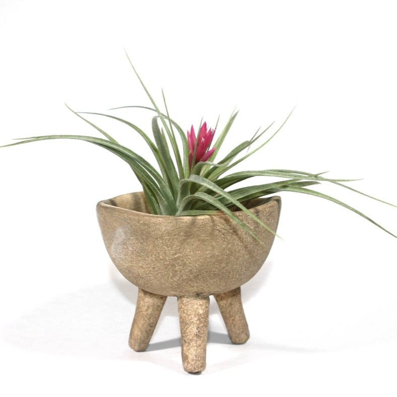 3.5 Terra-cotta Footed Planter