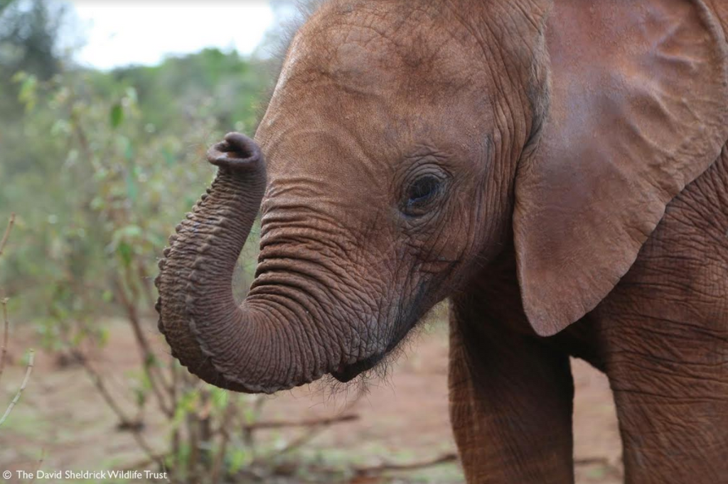 Behind the Scenes at the DSWT Nursery!