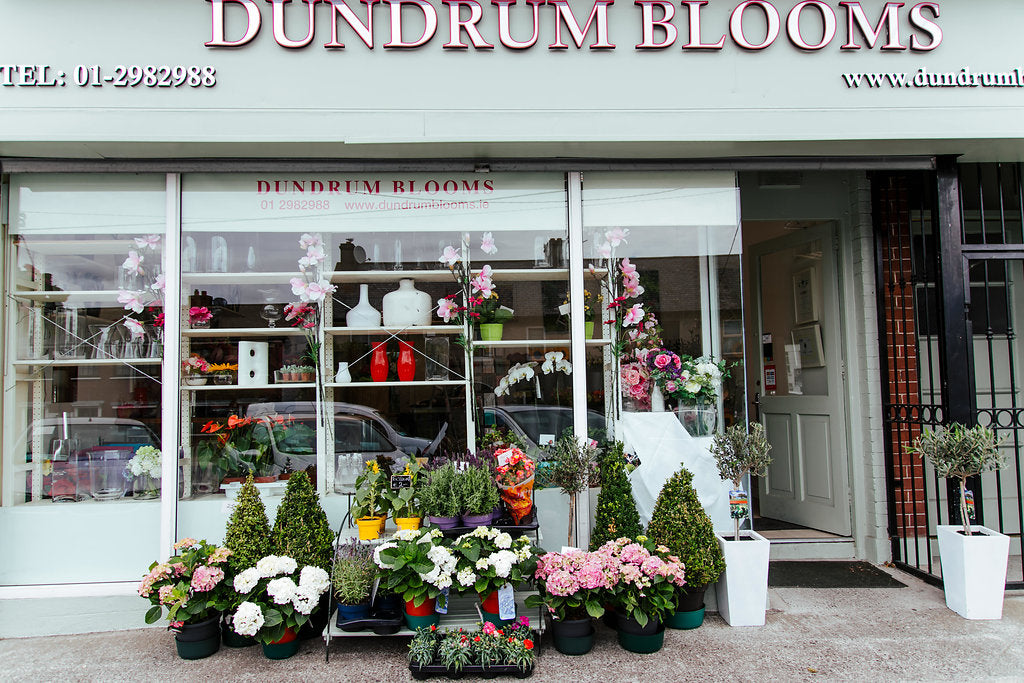 Dundrum Blooms
