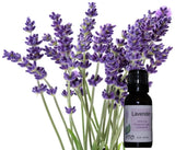 Lavender Essential Oil from PTO