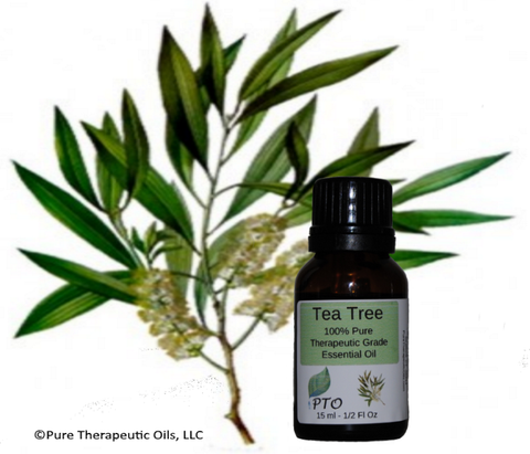 Tea Tree Essential Oil - Melaleuca alternifolia