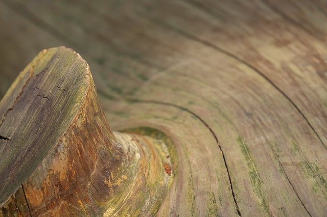 The Way Wood Works: Understanding the Grain and Fiber