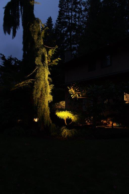 Uplighting tree with landscape spot light