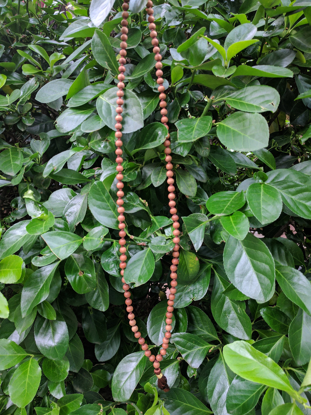 Sandalwood 108 bead knotted