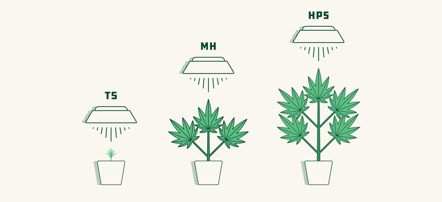 Chapter 5: Selecting the Best Grow Lights for Your Marijuana Production