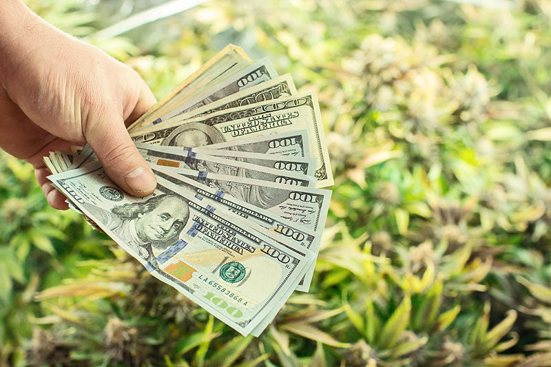 Master Grower Salary ($104,000 Avg  April 2019) - How Much Do Weed