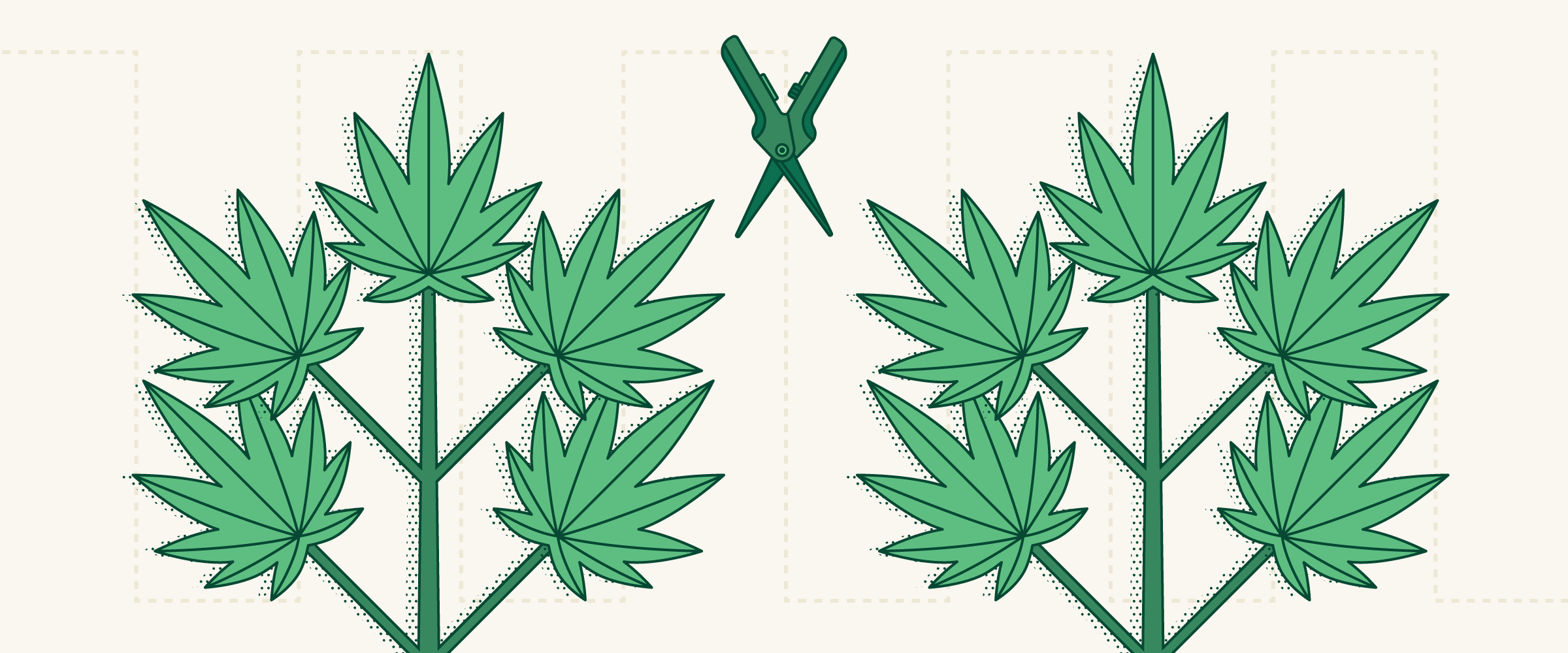 Cloning Marijuana: How To Clone a Weed Plant or Grow From Seeds