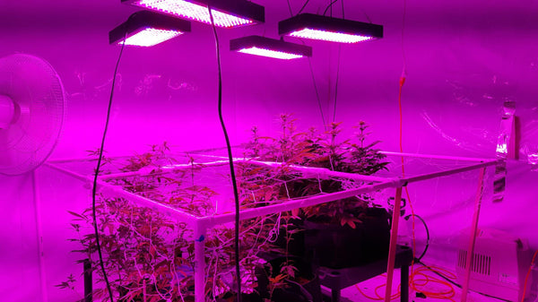 10 Best LED Grow Lights for Cannabis - Aug 2019 Buying Guide
