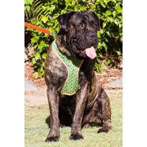 Dog harness: Orange tropicana - J'dore