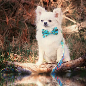 Dog collar & bow-tie: hey bae - J'dore