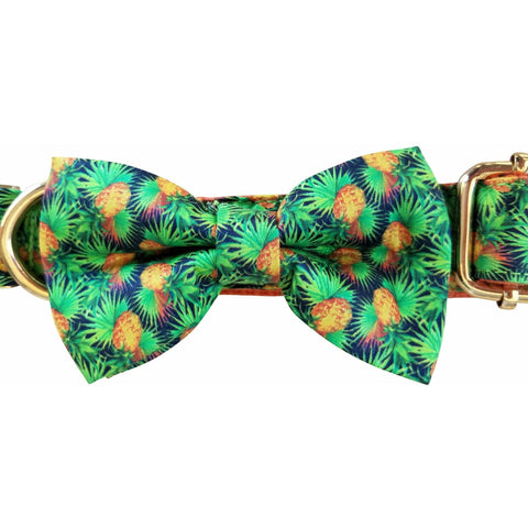 Orange tropicana dog collar with removable bow tie - J'dore